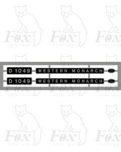 D1049 WESTERN MONARCH